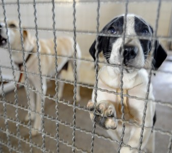 ABANDONO DE ANIMAIS AUMENTA 20% NAS FÉRIAS, DIZ ONG DE SÃO CARLOS, SP  São