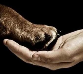 DECLARAÇÃO UNIVERSAL DOS DIREITOS ANIMAIS – SAIBA MAIS