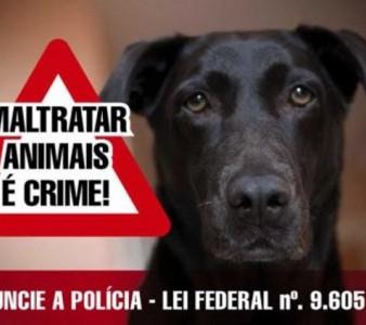 CASOS DE MAUS TRATOS CONTRA ANIMAIS SÃO DENUNCIADOS NA REGIÃO SERRANA