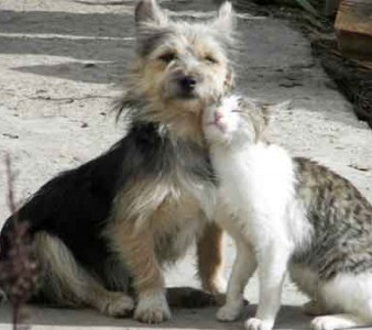 O ABANDONO DE ANIMAIS NAS RUAS VIRPU GRAVE PROBLEMA PARA A CIDADE