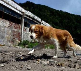 PROTETORAS ACOLHEM ANIMAIS ABANDONADOS ÁS VÉSPERAS DO NATAL